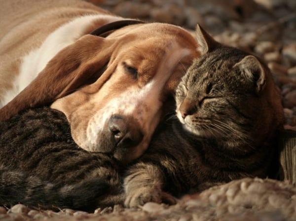 Certificati utili per portare con voi il vostro cane o il vostro gatto a Londra