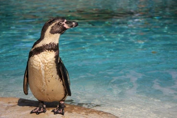 Visitare lo zoo di Londra. Gratis con il London pass